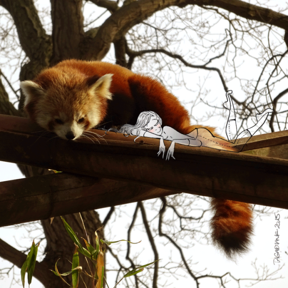 Red-Panda-on-Branches